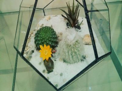 Флорариум с кактусами и суккулентами