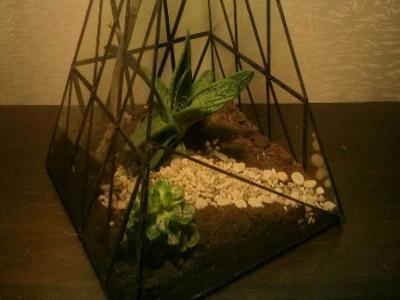 Пирамида с суккулентами