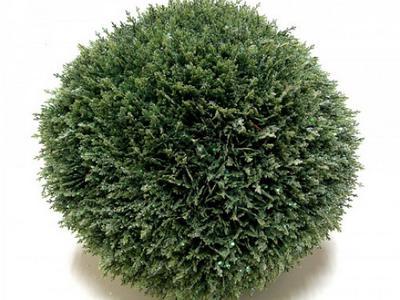 Искусственный шар кипарисовика заснеженный  флористика и дизайн